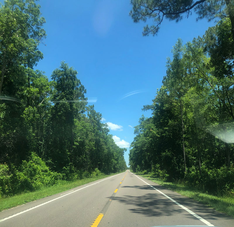 Driving through the Ocala Forest